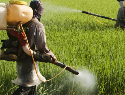 No sound science behind avoiding produce 'because of pesticides'
