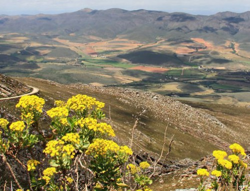 Hortgro calls for meaningful and economically sustainable land reform