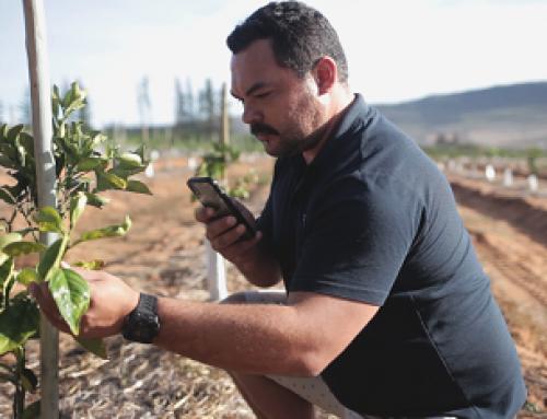 Aerobotics breaks new ground in digital agronomy