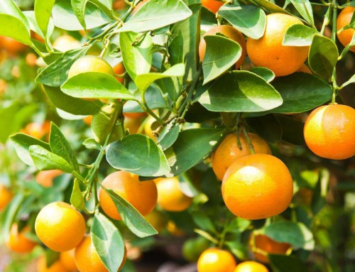 Diminishing citrus returns as volumes keep growing