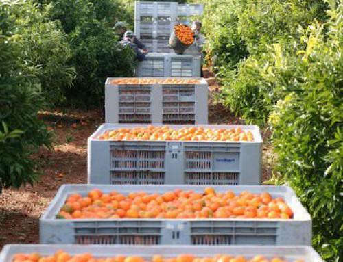 Spanish citrus should create brand