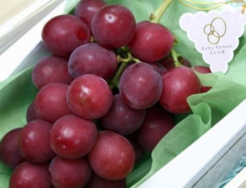 A $10 Japanese grape