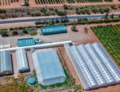 Citrus Australia launches protective screenhouse to prevent HLB