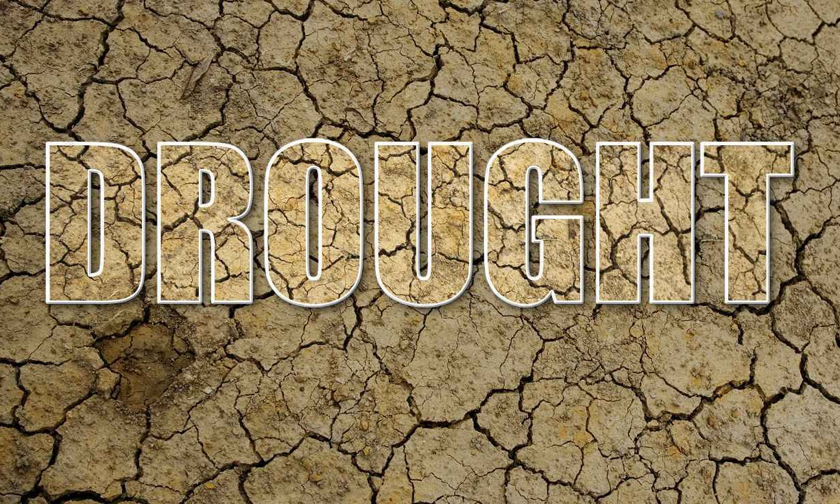 Western Cape drought threatens 50 000 agricultural jobs