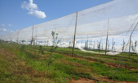 Lesotho's commercial apple industry to manage warming climate risk