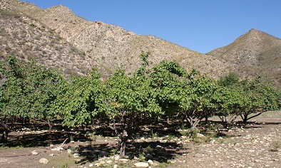 Klein Karoo drought in its 4th year