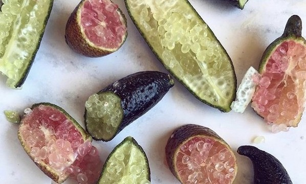 Finger limes offer hope against citrus greening